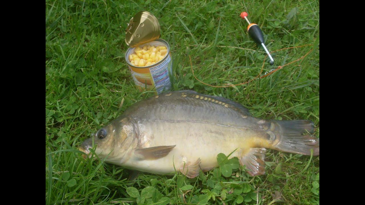 pêcher carpe sans amorçage